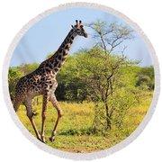 Giraffe On Savanna. Safari In Serengeti Round Beach Towel