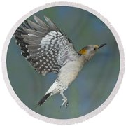 Golden-fronted Woodpecker Round Beach Towel