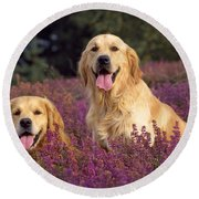Golden Retriever Dogs In Heather Round Beach Towel