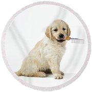 Golden Retriever Puppy Round Beach Towel