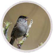 Goldencrowned Sparrow Round Beach Towel