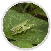 Grasshopper Mating On Grass Leaf Round Beach Towel