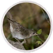 Gray-cheeked Thrush Round Beach Towel