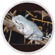 Gray Treefrog Round Beach Towel
