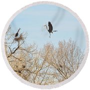 Great Blue Heron Nest Building 3 Round Beach Towel