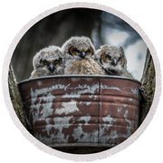 Great Horned Owl Chicks Round Beach Towel