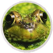 Green Frog Hiding In Duckweed Round Beach Towel