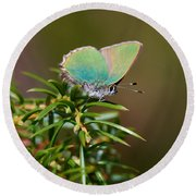 Green Hairstreak Round Beach Towel