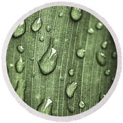 Green Leaf Abstract With Raindrops Round Beach Towel by Elena Elisseeva