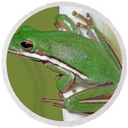 Green Treefrog Round Beach Towel