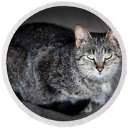 Grey Cat Portrait Round Beach Towel