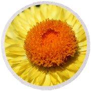 Helichrysum Bracteatum Named Strawburst Yellow Round Beach Towel