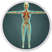 Human Body Showing Skeletal System Round Beach Towel