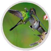 Hummingbirds At Feeder Round Beach Towel