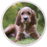 Irish Setter Puppy Round Beach Towel