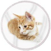 Isolated Ginger Kitten Round Beach Towel