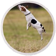 Jack Russell Jumping For Ball Round Beach Towel