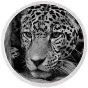 Jaguar In Black And White II Round Beach Towel