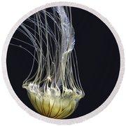 Jellyfish Of Aquarium Of The Bay San Francisco Round Beach Towel