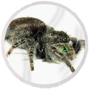 Jumping Spider Round Beach Towel