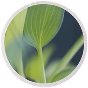 June Plantain Lily Close Ups Round Beach Towel