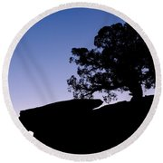 Juniper Tree At Dawn Round Beach Towel