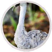 Juvenile Sandhill Crane Grus Canadensis Pratensis II Usa Round Beach Towel