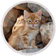 Kitten In Hydra Island Round Beach Towel