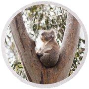 Koala Round Beach Towel