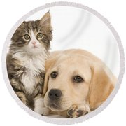 Labrador And Forest Cat Round Beach Towel