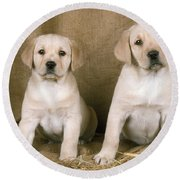 Labrador Retriever Puppies Round Beach Towel