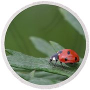 Lady Bird Round Beach Towel