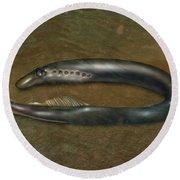 Lamprey Eel, Illustration Round Beach Towel