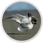 Laughing Gulls Round Beach Towel