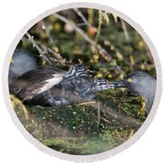 Least Grebe Round Beach Towel