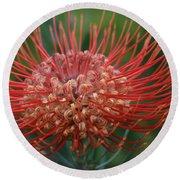 Leucospermum - Pincushion Protea - Tropical Sunburst Protea Flower Hawaii Round Beach Towel