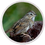 Lincolns Sparrow Round Beach Towel