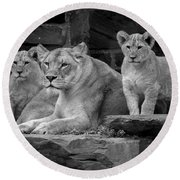 Lioness And Cubs Round Beach Towel