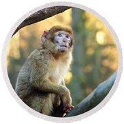 Little Monkey Round Beach Towel