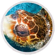 Loggerhead Sea Turtle Round Beach Towel