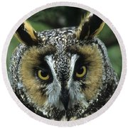Long-eared Owl Up Close Round Beach Towel