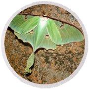 Luna Moth Round Beach Towel