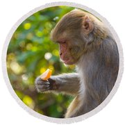 Macaque Eating An Orange Round Beach Towel