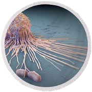 Macrophage Fighting Bacteria Round Beach Towel