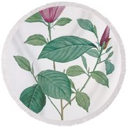 Magnolia Discolor, Engraved By Legrand Round Beach Towel