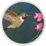 Male Broad-tailed Hummingbird Round Beach Towel