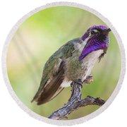 Male Costa Hummingbird Round Beach Towel