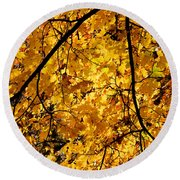 Maple Tree In Yellow Fall Colors Round Beach Towel