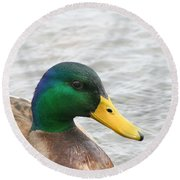 March Mallard  Round Beach Towel