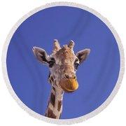 Masai Giraffe, Serengeti, Africa Round Beach Towel